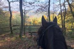 Traumhafte Aussicht in das Siebengebirge